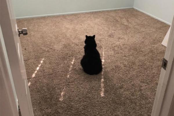 Пепе, возможно, вовсе не скучает, а просто не может понять, что стало с комнатой