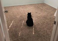 Грустная кошка Пепе растрогала пользователей Интернета (ФОТО)