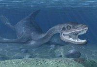 Тело морского чудовища обнаружили на побережье в США