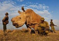 Смерть носорога Судана назвали трагедией для мира природы