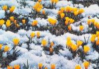 Синоптики рассказали, когда на европейской части России наступит весна