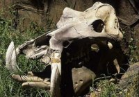 Череп дракона обнаружили на побережье Африки