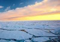 Площадь льдов Арктики достигла рекордных значений