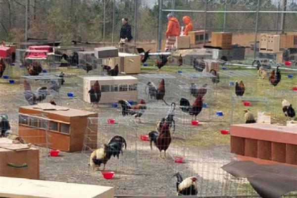 Сейчас они содержатся на территории тюрьмы как улики