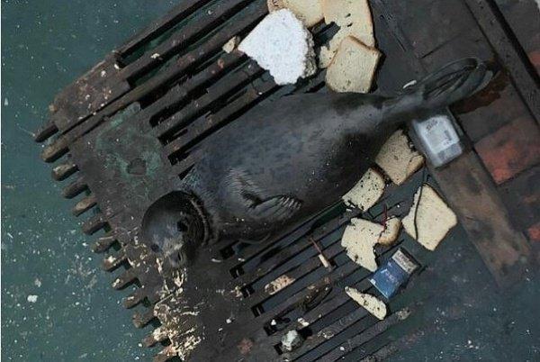 Животное было найдено в мазуте и мусоре вблизи 44‐го причала города