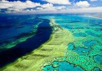 Большой Барьерный риф защитят экраном