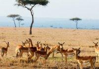В ООН предсказали скорую гибель половины животных Африки