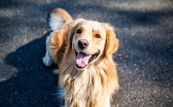 Внимательного пса наградили новым ошейником, костью и хорошим шампунем