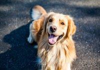 В Австралии пес спас целую семью