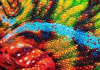 Искусственную «кожу хамелеона» разработали в МГУ
