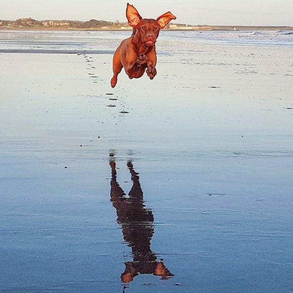 Летающий пес живет в Шотландии (ФОТО)