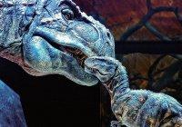 В США впервые нашли новорожденного тираннозавра
