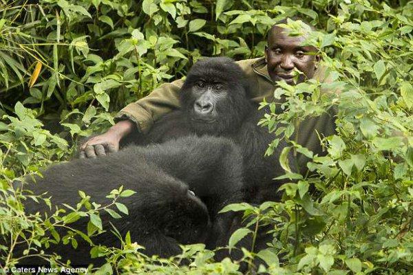 Скоро смотритель зоопарка начал замечать, что приматы очень ценят тактильную связь