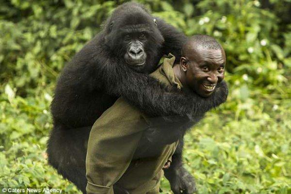 В зоопарке живут 2 самки гориллы, которые крайне любят обниматься