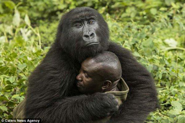 Долгое время мужчина присматривал за своими подопечными, регулярно общаясь с животными
