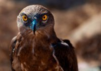 Биологи нашли у птиц орган-компас