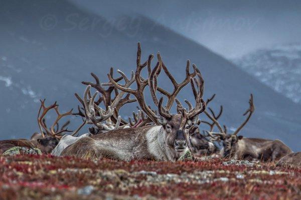 Погибло в общей сложности порядка 400 животных