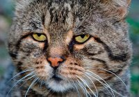 Туристов из России предупредили об опасности шведских кошек