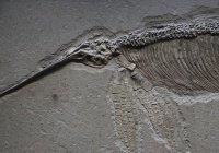 Беременного ихтиозавра обнаружили в Англии