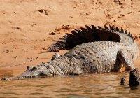 В Австралии рыбак 2 дня прожил с крокодилами