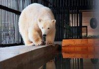 Медвежонок из Петербурга показал, как радоваться весне (ВИДЕО)