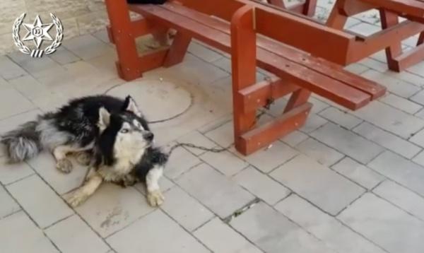 В Израиле собака вернулась домой благодаря песне (ВИДЕО)