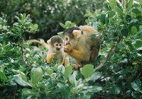 В Новой Зеландии обезьяны отбили атаку воров на зоопарк