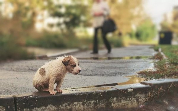 На Тверском бульваре в Москве состоится мастер-класс по лечению и уходу за бездомными животными