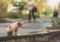 Мэр Москвы призвал помогать бездомным животным