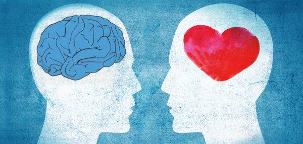 Мозг или сердце?