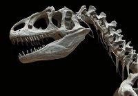 На аукционе в Париже продали 2 динозавров