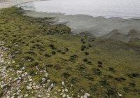 Байкал находится на грани экологической катастрофы