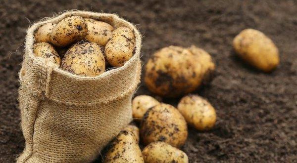 В рамках миссии «Лунная мини-биосфера» на поверхности космического объекта будут высажены семена картофеля и прочих растений