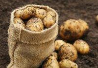 Картошку на Луне будет выращивать Китай
