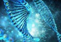 В России ДНК научили «чинить» раковые клетки