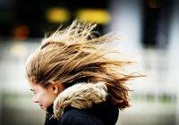 В Великобритании вора ограбил ветер (ВИДЕО)
