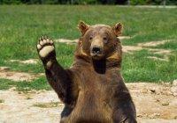 Медведь открыл футбольный матч (ВИДЕО)
