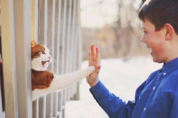 Акция Cat Pawsitive призвана привлечь внимание общества к кошкам из приютов