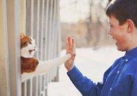 В Интернете стартовал кошачий флешмоб (ВИДЕО)