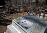Жительница Япония умерла у могилы своего кота