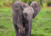 В Индии слоненок отказался бросать погибшую мать (ВИДЕО)