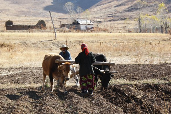 Эксперты ООН проанализировали продовольственную безопасность в Центральной Азии.