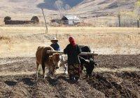 В ООН сообщили о миллионах голодающих в Центральной Азии