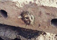 В Караганде кот застрял в бетонной плите (ВИДЕО)