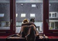 В Уфе из квартиры выселили 11 кошек