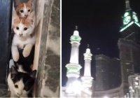Что может быть милее этих мекканских котят?