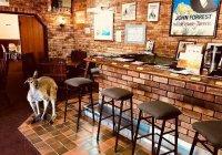 В Австралии кенгуру запретили посещать любимое кафе