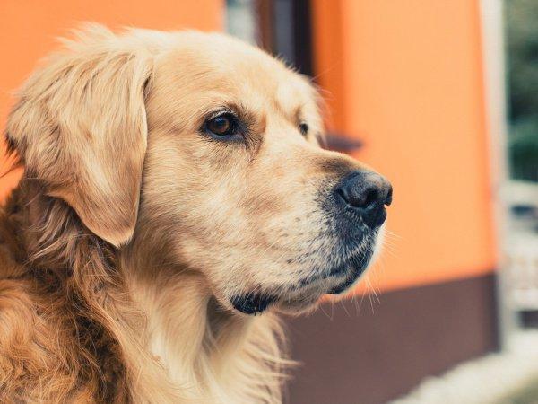 Сотрудники полиции ищут хозяина собаки, чтобы выяснить детали происшествия