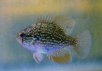 Ученые: Рыба снижает риск развития болезни Паркинсона