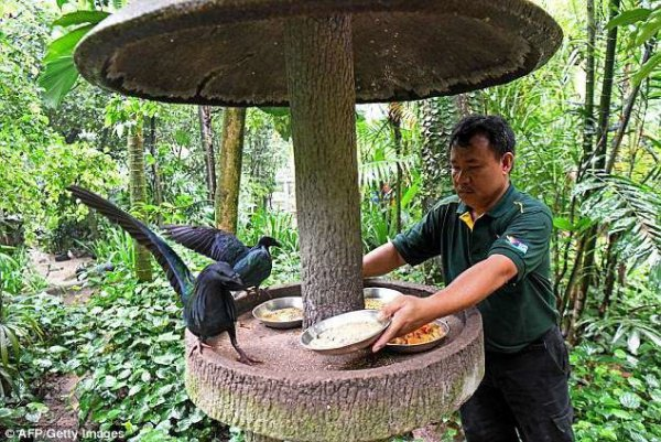 Недавно он стал заместителем начальника птичника